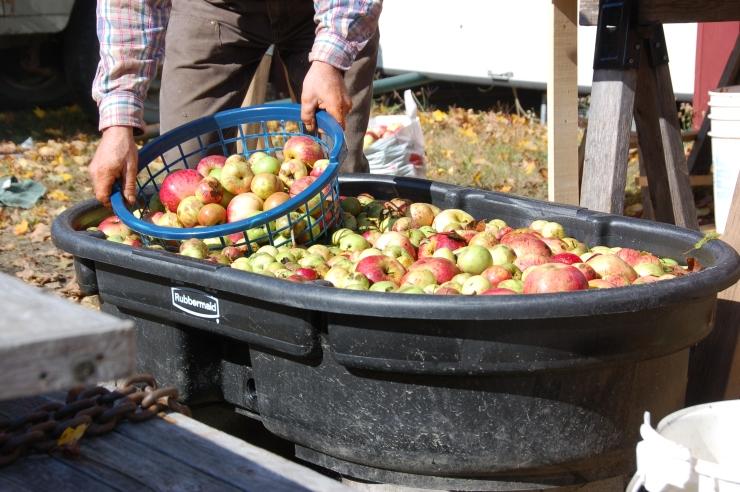 Apples 09-5